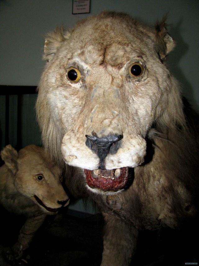 Упоротый лев